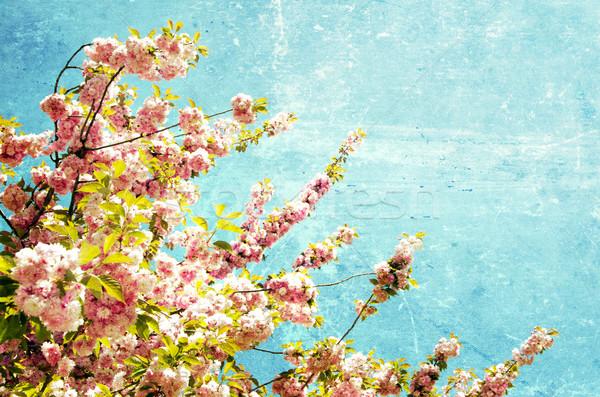 grunge flowers     Stock photo © Pakhnyushchyy