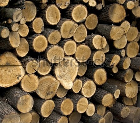 Yakacak odun büyük plan kâğıt yangın Stok fotoğraf © Pakhnyushchyy