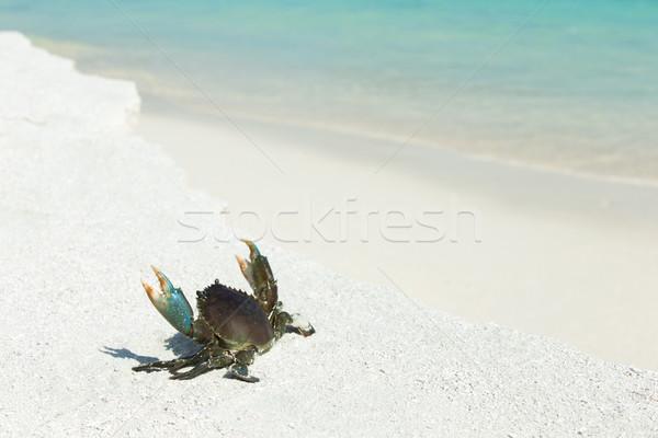краба пляж природы морем фон лет Сток-фото © Pakhnyushchyy