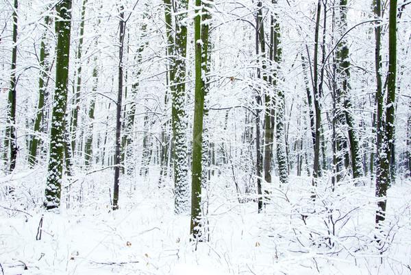 Tél erdő gyönyörű út fa fény Stock fotó © Pakhnyushchyy