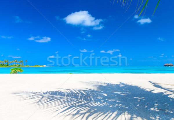 Mare bianco spiaggia tropicale pochi palme blu Foto d'archivio © Pakhnyushchyy