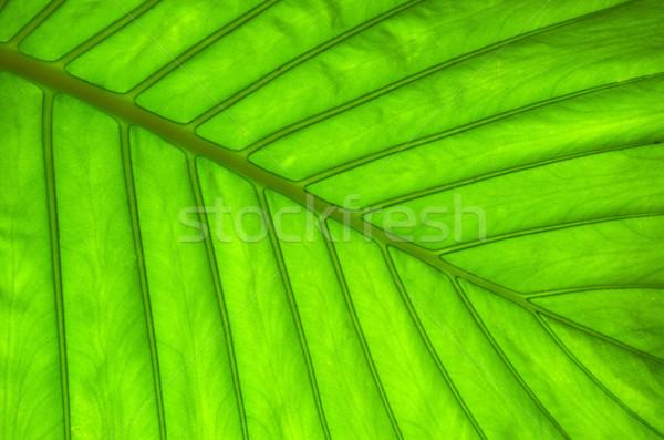 leaf  Stock photo © Pakhnyushchyy
