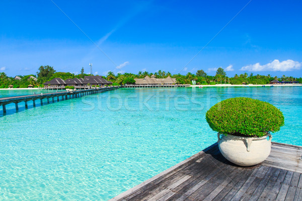 Mer blanche plage tropicale palmiers bleu Photo stock © Pakhnyushchyy