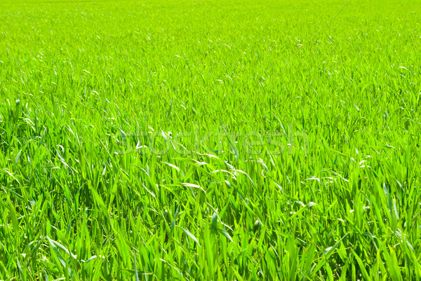 lawn backgrounds Stock photo © Pakhnyushchyy
