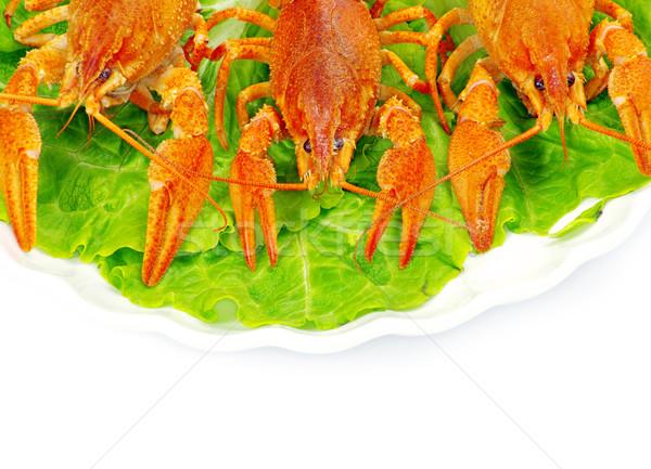 crayfish  Stock photo © Pakhnyushchyy