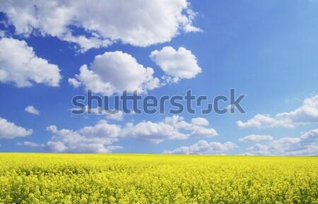 Nemi erőszak mező felhők égbolt nyár zöld Stock fotó © Pakhnyushchyy