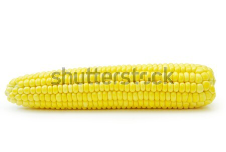 maize  Stock photo © Pakhnyushchyy