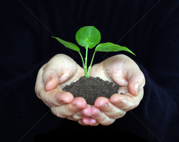 plant Stock photo © Pakhnyushchyy