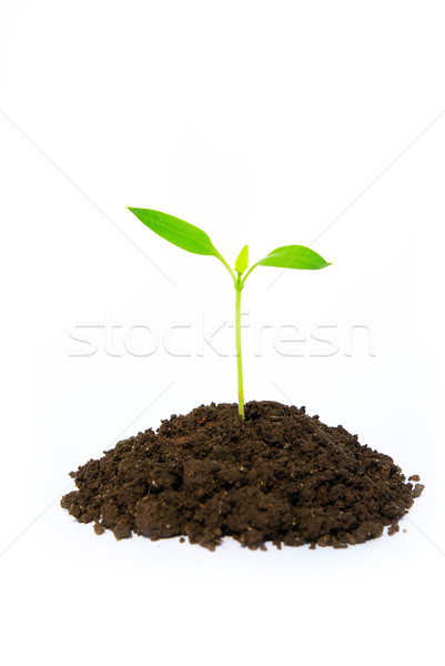 little green plant  Stock photo © Pakhnyushchyy