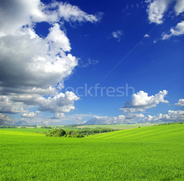 Domaine ciel bleu printemps herbe nature pelouse Photo stock © Pakhnyushchyy