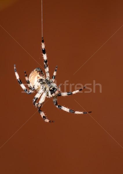 Pók piros természet háttér lábak szín Stock fotó © Pakhnyushchyy