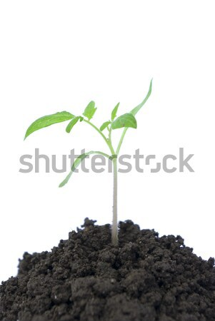 green plant Stock photo © Pakhnyushchyy