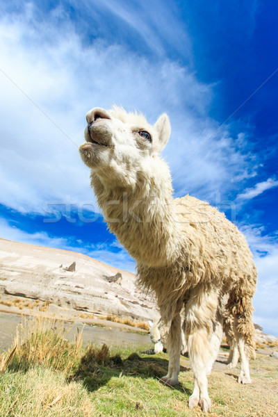Hemel gezicht natuur boerderij leven dier Stockfoto © Pakhnyushchyy