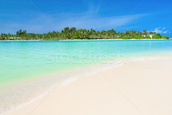 Deniz beyaz tropikal plaj az palmiye ağaçları mavi Stok fotoğraf © Pakhnyushchyy