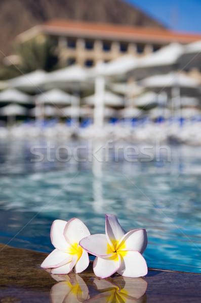Piscina flor tropical flor natureza espaço piscina Foto stock © Pakhnyushchyy
