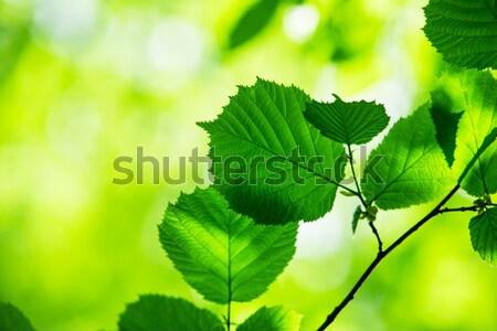 Untitled Stock photo © Pakhnyushchyy