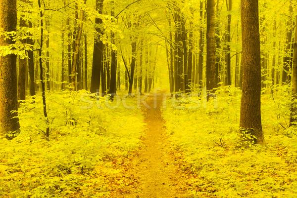 осень путь природы пейзаж фон деревья Сток-фото © Pakhnyushchyy