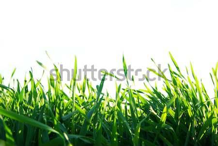 lawn Stock photo © Pakhnyushchyy