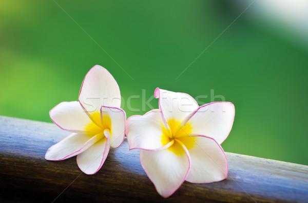 frangipani flowers  Stock photo © Pakhnyushchyy