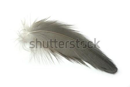Сток-фото: черный · Перу · изолированный · белый