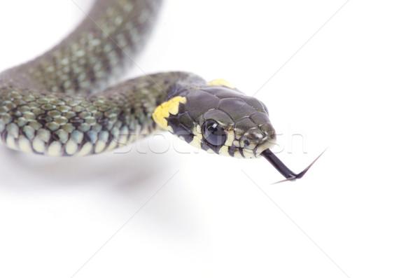 Stock photo: snake