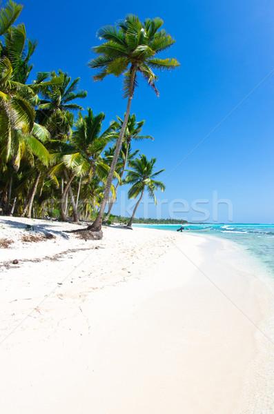 Strand palmbomen mooie water natuur landschap Stockfoto © Pakhnyushchyy