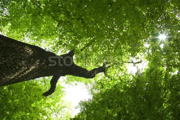 forest Stock photo © Pakhnyushchyy