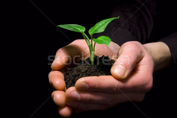Hands holding sapling Stock photo © Pakhnyushchyy