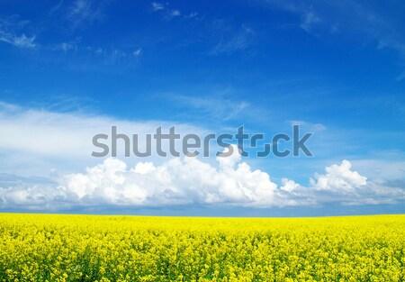 Jaune domaine fleurir ciel printemps montagne Photo stock © Pakhnyushchyy