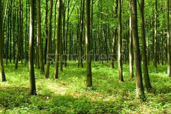 forest Stock photo © Pakhnyushchyy