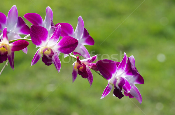 Orchidea bella verde fiore natura colore Foto d'archivio © Pakhnyushchyy