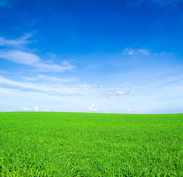 field Stock photo © Pakhnyushchyy