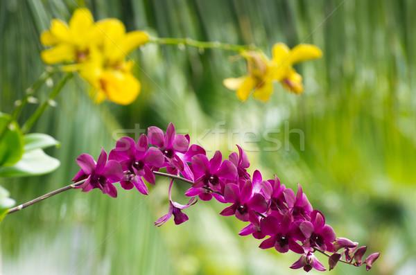 Orchidea bella verde fiore primavera natura Foto d'archivio © Pakhnyushchyy