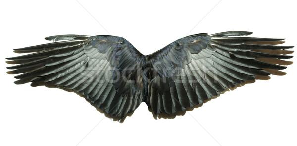 翼 ペア 孤立した 白 自然 鳥 ストックフォト © Pakhnyushchyy