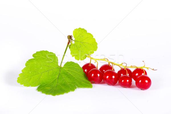 Kırmızı frenk üzümü yalıtılmış beyaz yaprak meyve Stok fotoğraf © Pakhnyushchyy