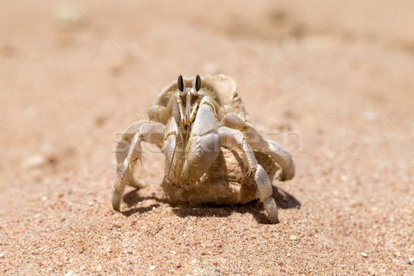Crab  Stock photo © Pakhnyushchyy