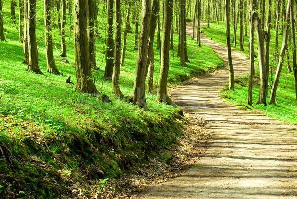 森林 パス 緑 太陽 光 影 ストックフォト © Pakhnyushchyy