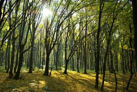 nature Stock photo © Pakhnyushchyy