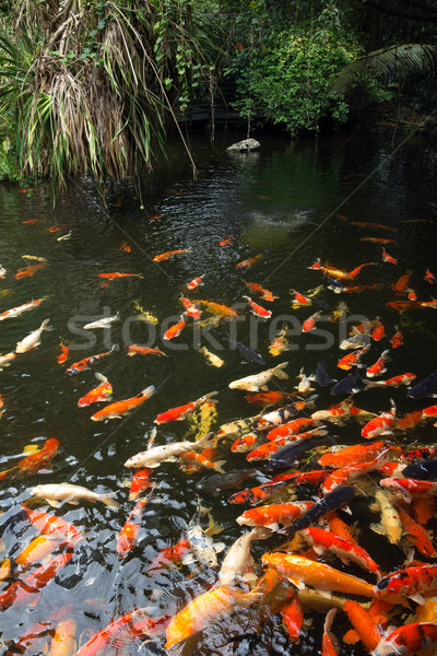 carps Stock photo © Pakhnyushchyy