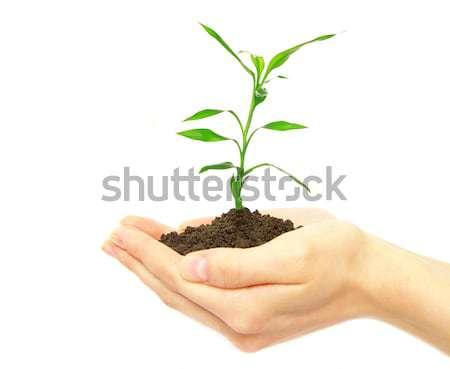 Növény kezek női fehér nő fény Stock fotó © Pakhnyushchyy