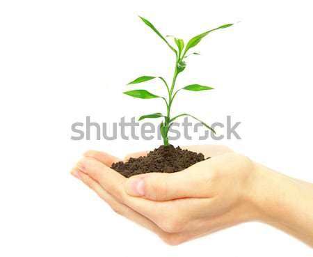 Planta mãos feminino branco mulher luz Foto stock © Pakhnyushchyy