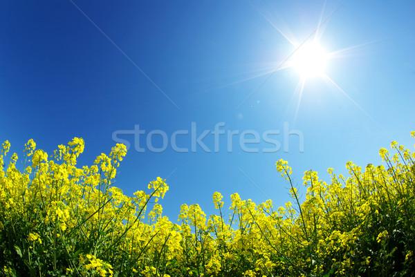 Violación campo nubes cielo verano verde Foto stock © Pakhnyushchyy