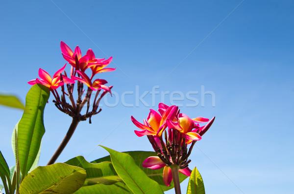 Red flowers  Stock photo © Pakhnyushchyy