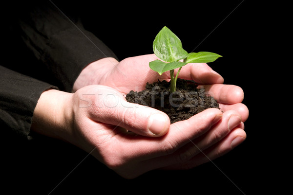Stock photo: Hands holding sapling in soil