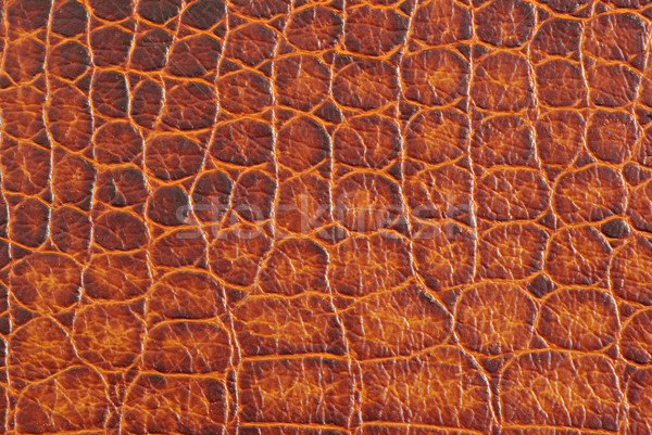 crocodile texture Stock photo © Pakhnyushchyy