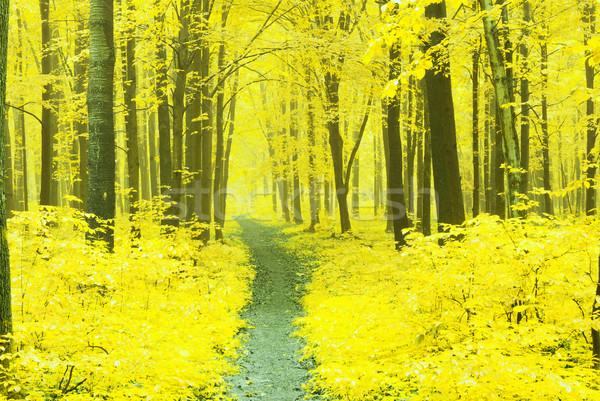 ősz erdő út természet fák szépség Stock fotó © Pakhnyushchyy