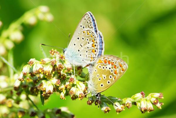 Schmetterling green leaf Natur Wissenschaft Leben Tier Stock foto © Pakhnyushchyy