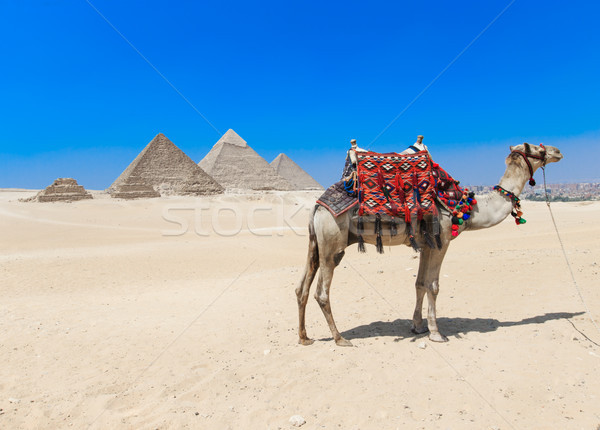 pyramids with a Giza in Cairo, Egypt. Stock photo © Pakhnyushchyy