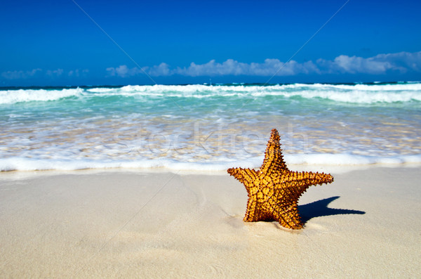 Photo stock: Starfish · océan · plage · marin · ciel · nuages
