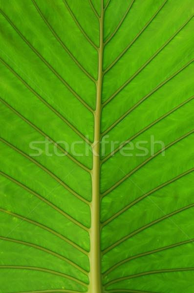 Yaprak doku yeşil yaprak soyut yaz yeşil Stok fotoğraf © Pakhnyushchyy